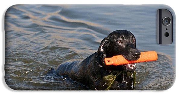 Black Labrador Retriever, Retrieving IPhone Case by William H. Mullins