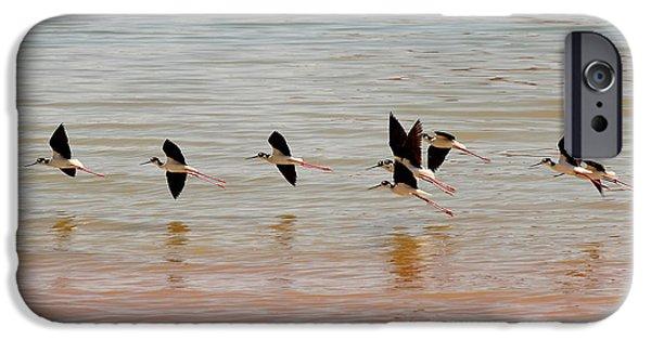 Black-necked Stilt - Lake Powell IPhone Case by Julie Niemela