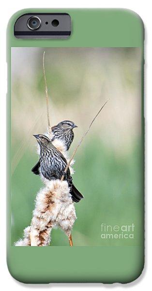 Blackbird Pair IPhone 6s Case by Mike  Dawson