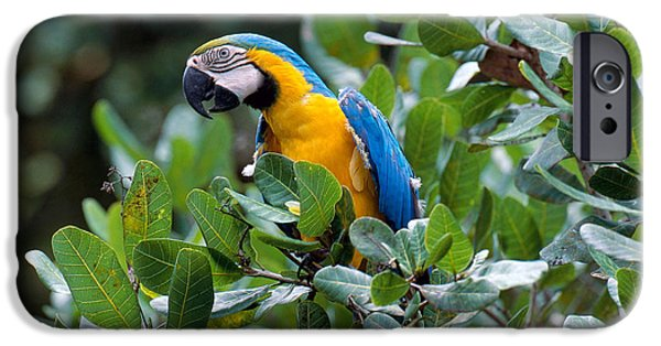 Blue And Yellow Macaw IPhone 6s Case by Art Wolfe