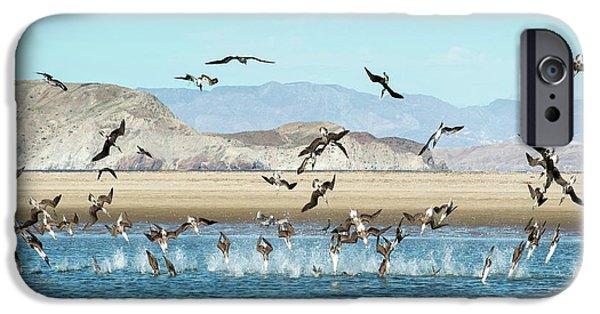 Blue-footed Boobies Feeding IPhone 6s Case by Christopher Swann