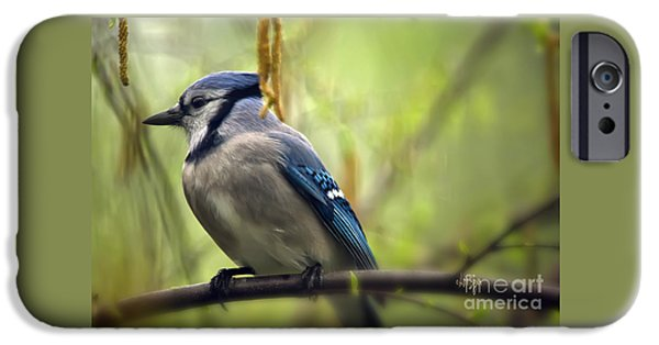 Blue Jay On A Misty Spring Day IPhone 6s Case by Lois Bryan