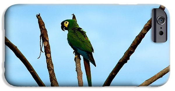 Blue-winged Macaw, Brazil IPhone 6s Case by Gregory G. Dimijian, M.D.