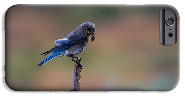 Bluebird Lunch IPhone 6s Case by Mike  Dawson