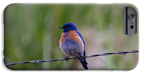 Bluebird On A Wire IPhone 6s Case by Mike  Dawson