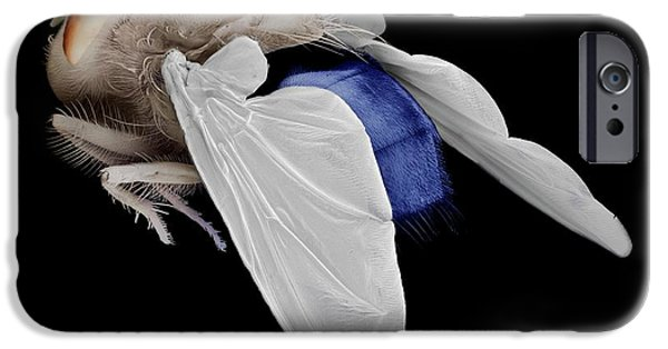 Bluebottle Fly IPhone Case by Clouds Hill Imaging Ltd