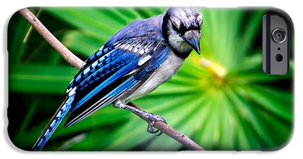 Thoughtful Bluejay IPhone 6s Case by Mark Andrew Thomas