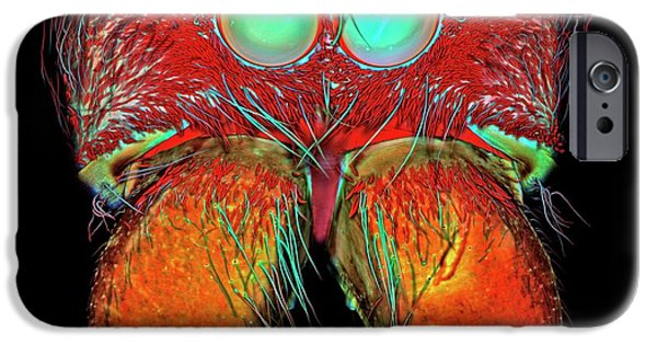 Bold Jumping Spider IPhone Case by Igor Siwanowicz