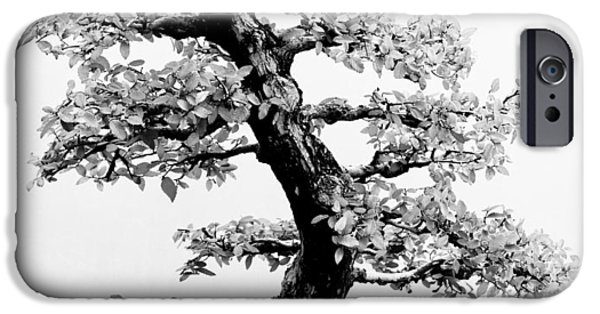Bonsai Tree IPhone Case by Sebastian Musial