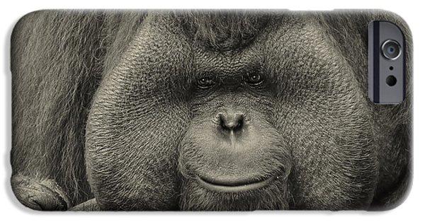 Bornean Orangutan II IPhone 6s Case by Lourry Legarde