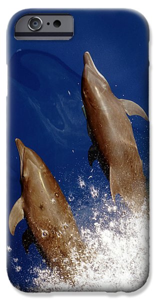 Bottlenose Dolphins Tursiops Truncatus IPhone 6s Case by Anonymous