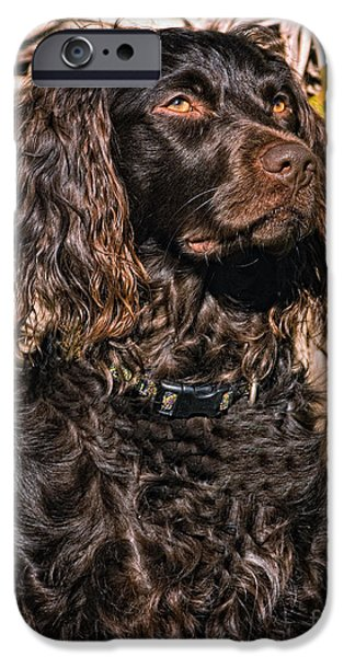 Boykin Spaniel Portrait IPhone 6s Case by Timothy Flanigan