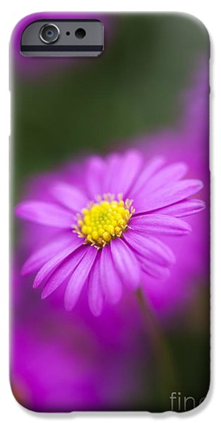 Swan River Daisy IPhone Case by Tim Gainey