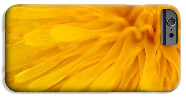 Bright Yellow Dandelion Flower IPhone Case by Natalie Kinnear