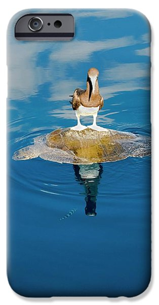 Brown Booby And Marine Turtle IPhone 6s Case by Christopher Swann