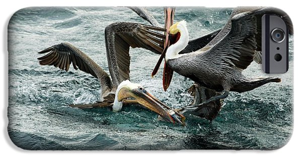 Brown Pelicans Stealing Food IPhone 6s Case by Christopher Swann