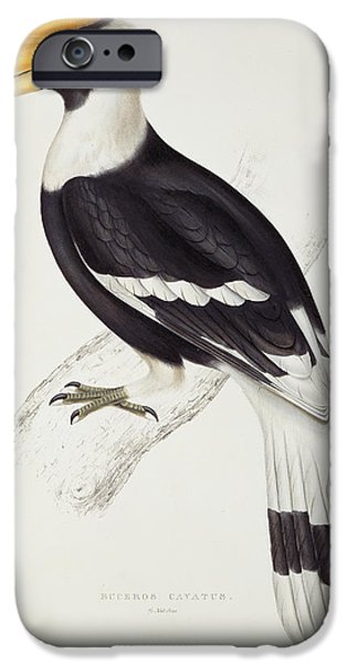 Great Hornbill IPhone 6s Case by John Gould