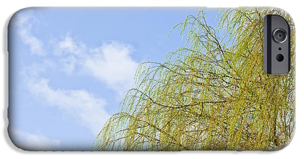 Budding Willow IPhone Case by Tom Gowanlock