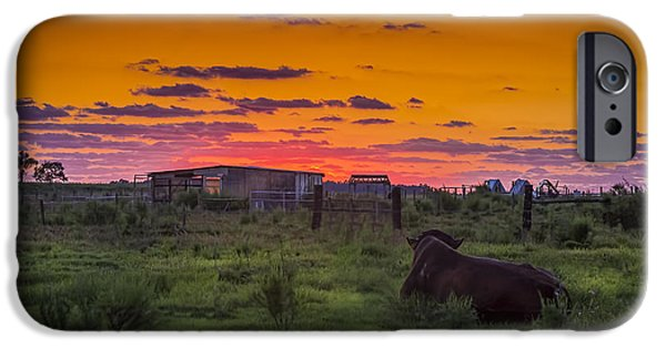 Bull Sunset IPhone Case by Marvin Spates