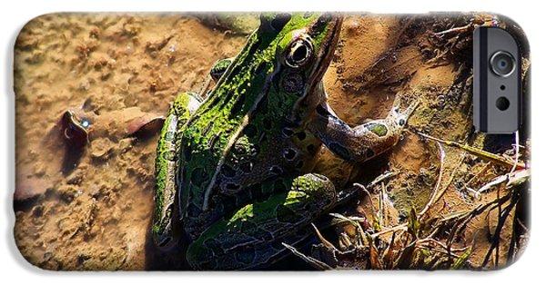 Bullfrog 2 IPhone Case by Chris Flees
