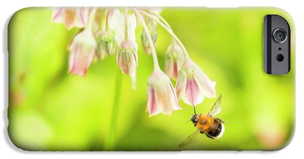 Bumble Bee Gathering Pollen IPhone Case by Ashley Cooper