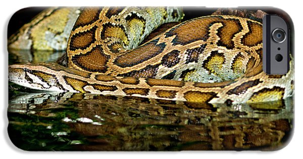 Burmese Python, Python Molurus IPhone 6s Case by David Northcott