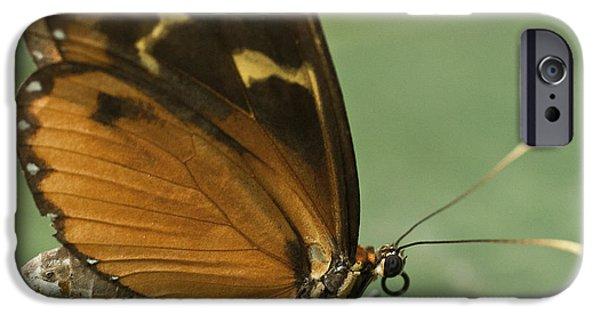 Butterfly Eueides Isabella IPhone Case by Heiko Koehrer-Wagner
