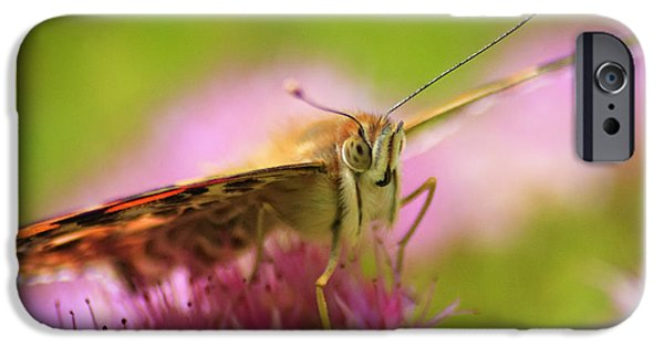 Butterfly Macro IPhone Case by Adam Romanowicz