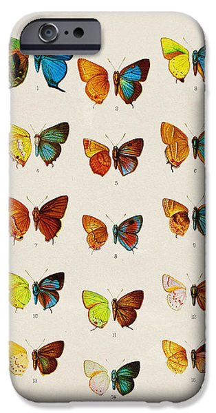 Butterfly Plate IPhone 6s Case by Pati Photography