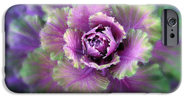 Cabbage Flower IPhone 6s Case by Jessica Jenney
