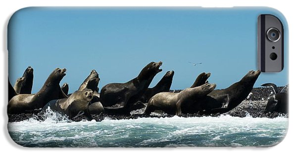California Sea Lions IPhone Case by Christopher Swann