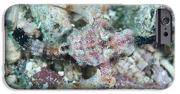 Camouflaged Pegasus Sea Moth IPhone 6s Case by Scubazoo