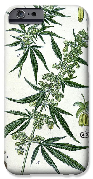 Cannabis IPhone Case by French School
