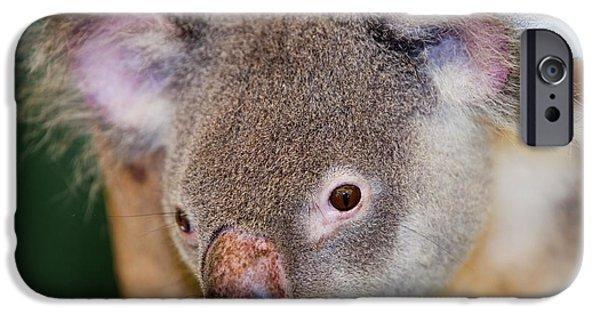 Captive Koala Bear IPhone 6s Case by Ashley Cooper