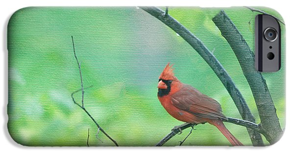 Cardinal In Rain IPhone Case by Kay Pickens