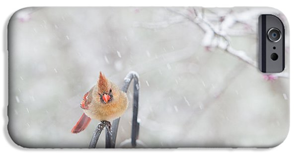 Cardinal In Snow IPhone Case by Kay Pickens