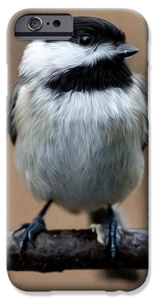 Carolina Chickadee IPhone Case by John Haldane