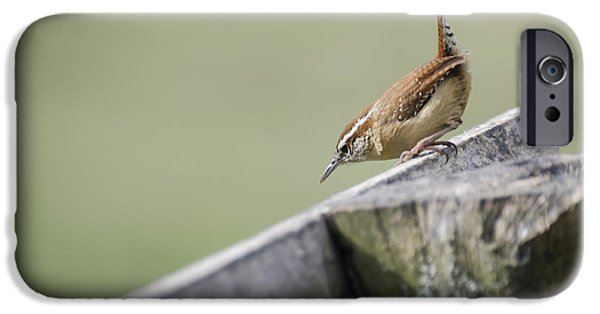 Carolina Wren Two IPhone 6s Case by Heather Applegate