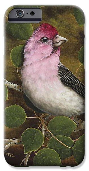 Cassins Finch IPhone 6s Case by Rick Bainbridge