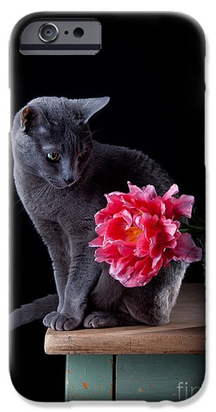 Cat And Tulip IPhone Case by Nailia Schwarz