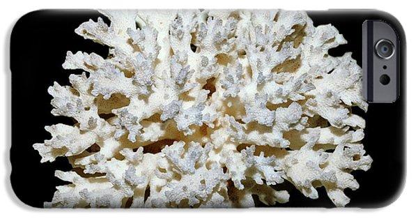 Cauliflower Coral (pocillopora Sp.) IPhone 6s Case by Dirk Wiersma
