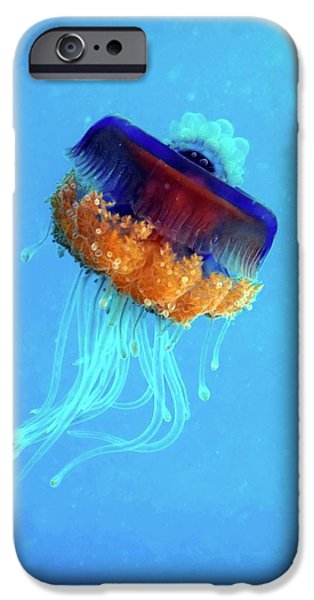 Cauliflower Jellyfish IPhone 6s Case by Louise Murray
