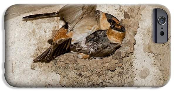 Cave Swallows IPhone Case by Anthony Mercieca