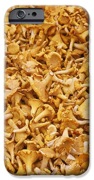 Chanterelle Mushroom IPhone 6s Case by Anonymous