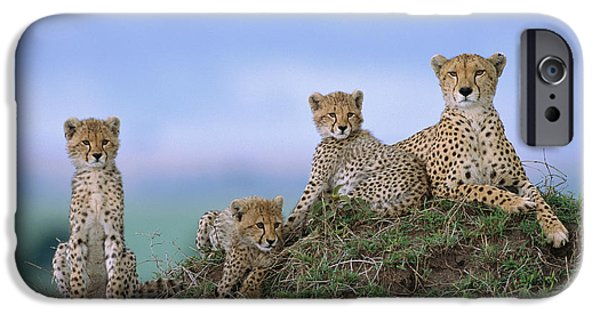 Cheetah Mother And Cubs Masai Mara IPhone 6s Case by Yva Momatiuk John Eastcott