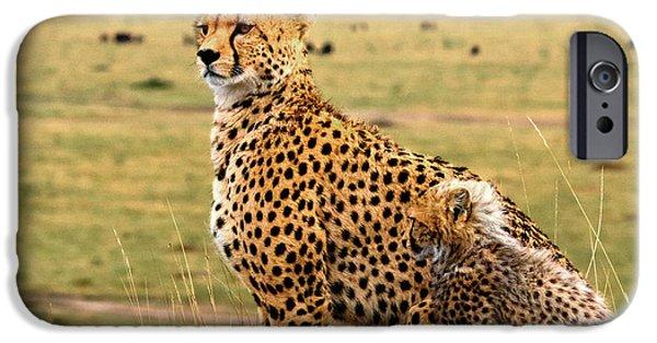 Cheetahs IPhone 6s Case by Babak Tafreshi