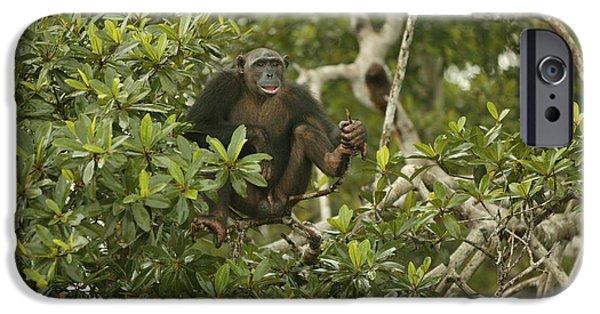 Chimpanzee In Tree IPhone Case by Jean-Michel Labat