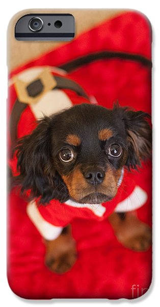 Christmas Puppy IPhone Case by Kay Pickens