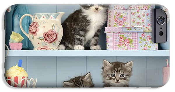 Baking Shelf Kittens IPhone 6s Case by Greg Cuddiford