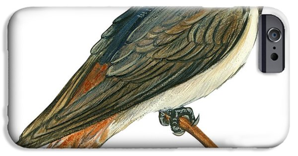 Cliff Swallow  IPhone 6s Case by Anonymous
